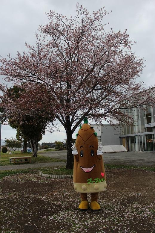 3枚目ヴィーブルくんは桜を眺めました