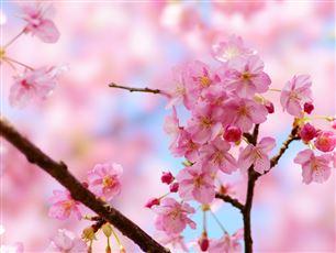 6枚目桜に関するヴィーブルくんメモ